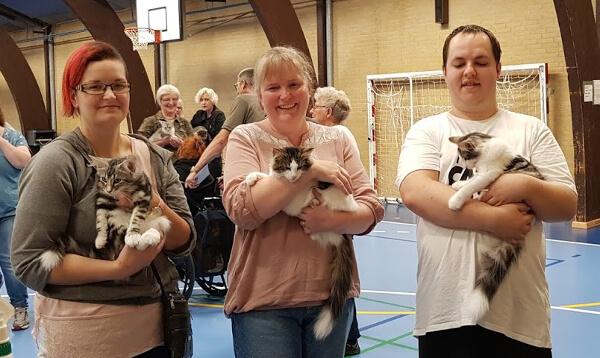 Velkommen • DK Silverleaf • Norsk Skovkatte • Norwegian Forest cats
