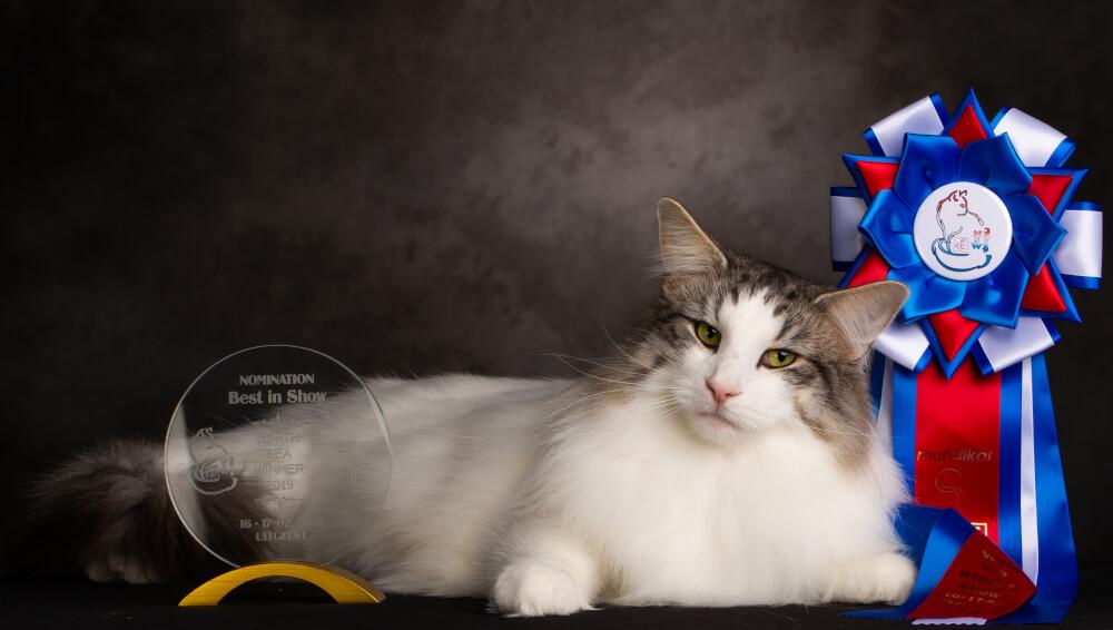 Kontakt • DK Silverleaf • Norsk Skovkatte • Norwegian Forest cats