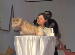 Resultater 2014 • DK Silverleaf • Norsk Skovkatte • Norwegian Forest cats