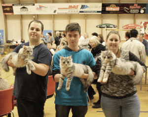 Resultater 2015 • DK Silverleaf • Norsk Skovkatte • Norwegian Forest cats