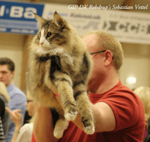 Results 2015 • DK Silverleaf • Norsk Skovkatte • Norwegian Forest cats