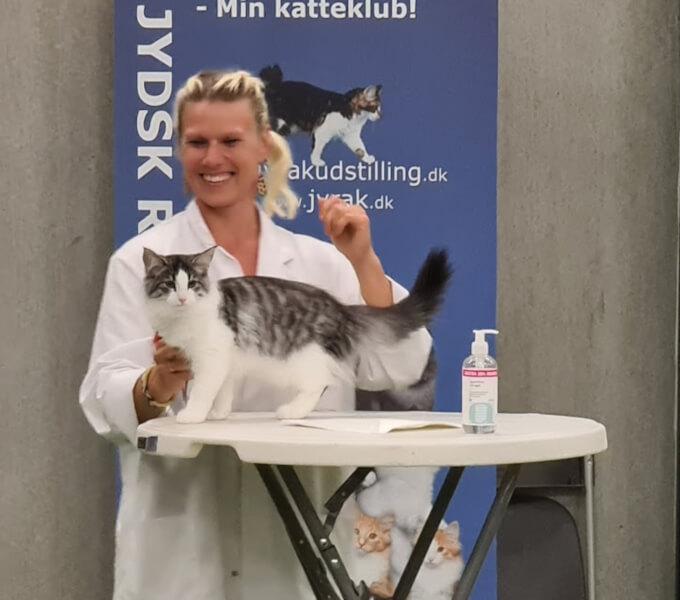 Results 2021 • DK Silverleaf • Norsk Skovkatte • Norwegian Forest cats